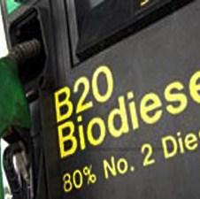 Nedostatak uljane repice glavna prepreka većoj proizvodnji biogoriva