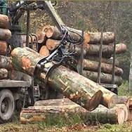 Sektor šumarstva u teškoj situaciji: Prioriteti donošenje legislative i certificiranje