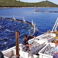 Bh. proizvođači ribe nastoje s državom utvrditi visinu poticaja za 2010. godinu - Nemarom države ispašta važna izvozna grana