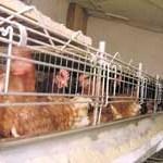 Bh. izvoznicima konzumnih jaja otežan nastup na tržištima Srbije i Hrvatske