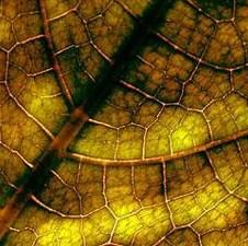 List koji proizvodi struju