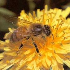 Peti internacionalni sajam pčelarstva i pčelarske opreme od 24. do 26. augusta u Bihaću