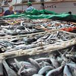 Do kraja mjeseca četiri bh. firme dobiti će dozvole za izvoz ribe u zemlje Evropske unije