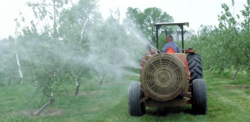 Bordovska čorba je izvanredan fungicid i baktericid