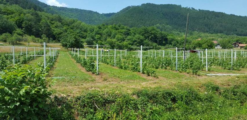 Bosnaplast nudi proizvodnju neophodnih PVC stubova za uzgoj maline