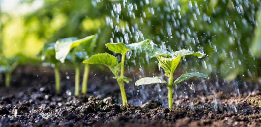 GAJ uzgaja i prodaje sadnice i distribuira repromaterijale za poljoprivredu