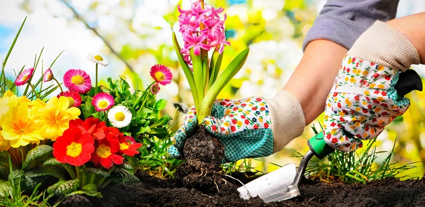 Odabir dobre zemlje je temelj zdravoj sadnici