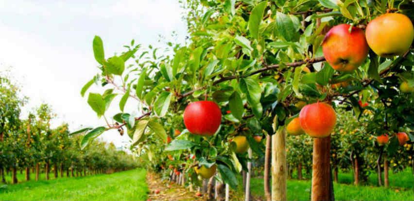 Biotech 3-10-5+2MgO Organsko mineralno gnojivo za vaš voćnjak