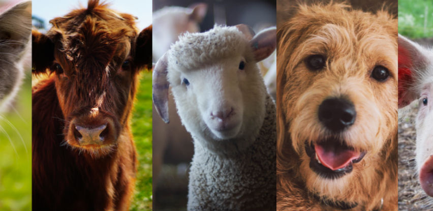 MSD Animal Health - Pouzdan izvor zdravlja životinja