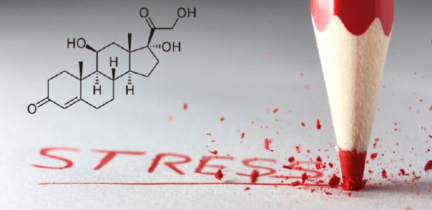 Kortizol - Hormon stresa koji uvjetuje debljanje i želju za slatkim