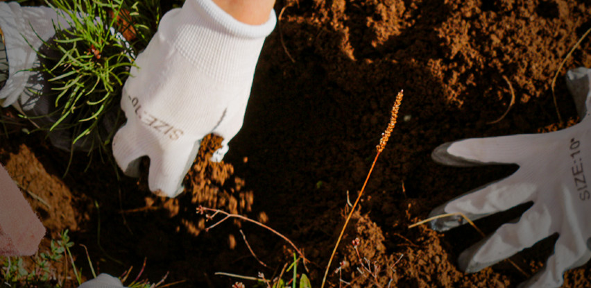 Voda SARA ponosni partner projekta Let's Do It - milion sadnica za jedan dan