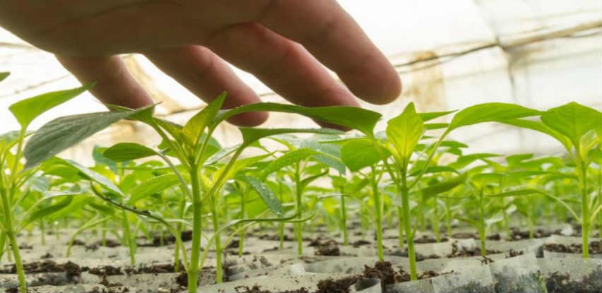 Supstrat za uzgoj presadnica povrća i cvijeća BLOCK A