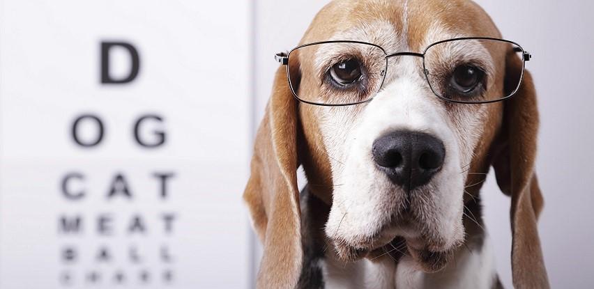 Obavite oftamološki veterinarski pregled u MIM Coop ambulanti